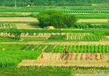 承包期延長30年,農村土地流轉將發生這四大新變化!