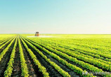 土地流转将是农业转型赚钱方式之一,外出再也不担心土地荒废了