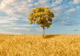 鄉村振興 要加速農村農業經濟轉型